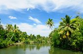 picture of alleppey  - Coco trees reflection at back waters of Kerala India - JPG
