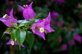 foto of small-flower  - Cute flower growing in a park in a tropical country  - JPG