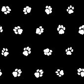 pic of footprint  - Contrast black and white seamless pattern with cat footprints - JPG