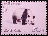 North Korea - 1975: Postal Stamp Printed In North Korea Shows An Image Of An Koala Bear On A White B