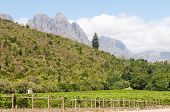 picture of fynbos  - The Hottentots - JPG