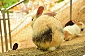 stock photo of cony  - Rabbits are resting on a rock in comfort - JPG
