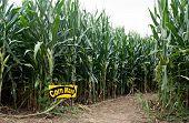 Corn Maze Entrance