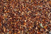 Autumn Leaves On The Floor
