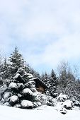 stock photo of winter scene  - winter home with pine trees and snow background - JPG