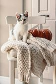 Cute kitten relaxing on warm sweater on a chair. Lazy cat resting on soft pullover. November weekend poster