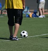 Soccer Ball By The Official