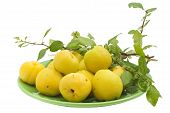 The Yellow Japanese  Quince