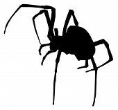 Creepy Spider Silhouette