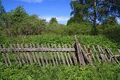 old wooden fence amongst herbs