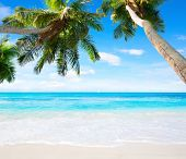 Scenic seascape with coconut palm trees and oceans turquoise water. Idyllic tropical beach scene.  poster