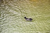 A Dog Playing Fetch In The Water Taken From Above poster
