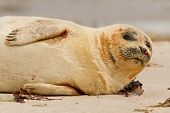 A Common Seal