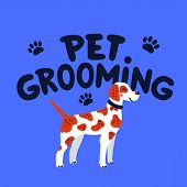 Pet Grooming Concept. Pet Grooming Lettering And Pointer Dog. Dog Care, Goods For Bathing, Grooming, poster