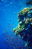 picture of coral reefs  - Group of coral fish in blue water - JPG