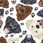 Cheerful Illustration Labrador poster