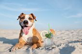 Cute Dog On The Beach And A Glass Of Cold Cocktail Drink. Summer Vacation, Time By The Seaside Conce poster