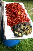 Crawfish3