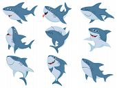 Cartoon Sharks. Comic Shark Animals, Scary Jaws And Ocean Swimming Angry Sharks. Marine Predator Fis poster
