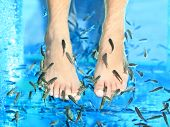 Fish Spa pedicure Rufa Garra treatment. Feet and fish in blue water. Woman feet.