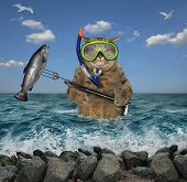 The Cat Underwater Hunter In A Mask And A Snorkel With A Spear Gun Catched A Big Fish In The Sea. poster