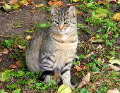 Tabby cat in autumn in Riga