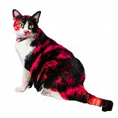 Close-up Pictures Of Three Kitty-colored Cats, Dazzled And Careful On The Studio Shooting Floor, Iso poster