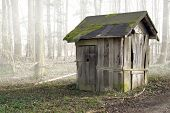 picture of shacks  - foggy scenery includinga old ramshackle wooden shack in the forest - JPG