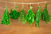 Fresh Herbs Collection is Hanging and Wooden texture / Vintage Style