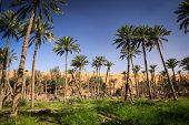 foto of oman  - Oasis in the middle of a desert  - JPG