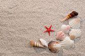 Shells And Starfish On Sand