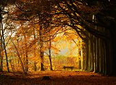 stock photo of settee  - Bench in autumn park at the end of a beech lane - JPG