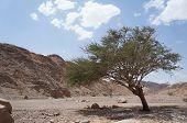 Wadi Shahamon near Eilat