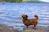 King of the Lake