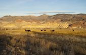 Cattle Grazing Ranch Livestock Farm Animals Western Mountain Landscape