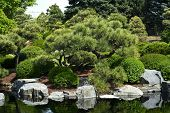 stock photo of plant species  - Botanic Garden - Japanese Garden with Small Pond.