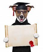 Garduate Dog