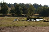 image of open grazing area  - Group of horses grazing in an open area near a small pond - JPG