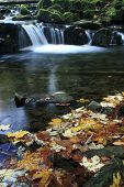 Autumn on Satina Creek
