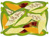 A Pile of Fresh Organic  Corns Background