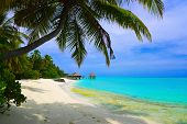 image of tropical island  - Water bungalows on beach of tropical island  - JPG
