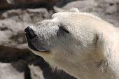 Polar Smile