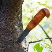 Knife Stuck In Tree