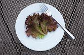 Lettuce Leaf and Fork