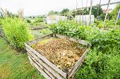 picture of garbage bin  - Compost bin and stringbeans in a vegetable garden patch - JPG