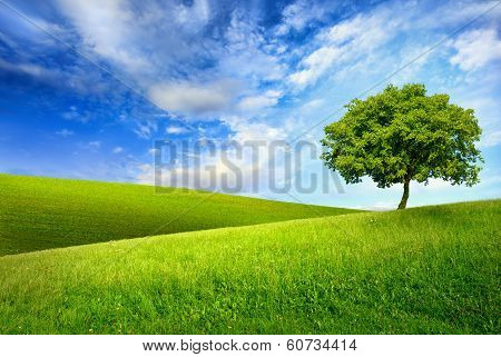 Single Tree On Top Of A Green Hill poster
