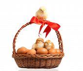 �?��?�¡ute little chickens on eggs inside basket, isolated on white background