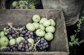 Rustic Fruit