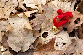 Jingle bell with red ribbon in the wood