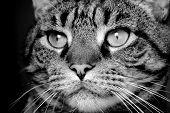 Big eyed tomcat